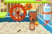 Hamsters Verzorgen